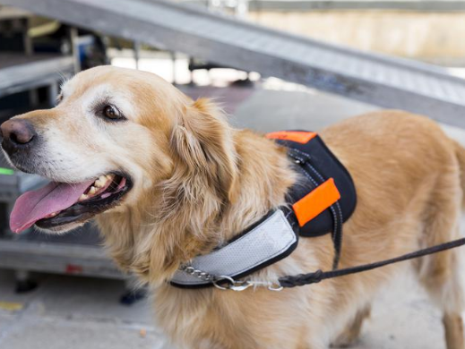 Ndis To Cut Funding For Hearing Impaired Guide Dogs